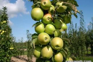 کلیات نیازهای آب و هوائی محصول سیب