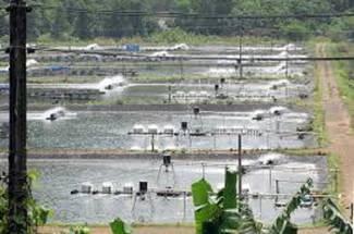 شرایط آب وهوایی منطقه پرورش میگو