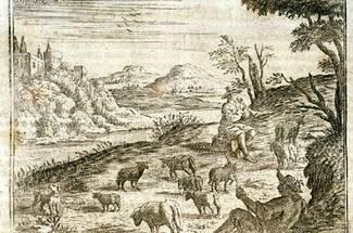تاریخچه پرورش گوسفند و دامداری