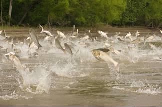 کاربرد پیش بینی های هواشناسی در پرورش ماهیان گرمابی