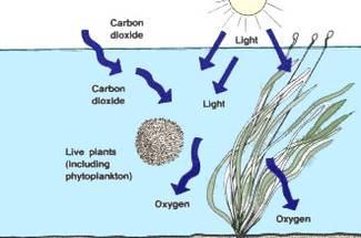 گاز کربنیک در استخر پرورش ماهی گرم آبی