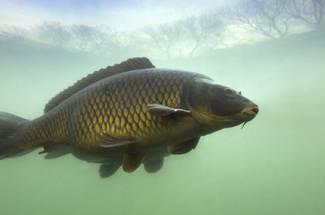 گرما و سرما در استخر های پرورش ماهی گرم آبی