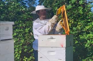 کندوی جعبه ای (مدرن) زنبور عسل