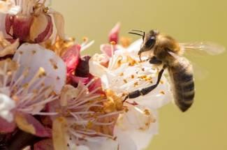 نقش زنبورعسل در کشاورزی و محيط زيست