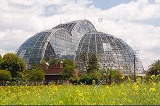 گلخانه داری مدرن در ژاپن