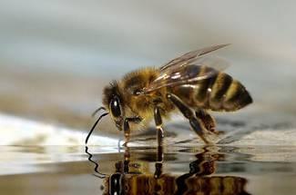 فصل D در منحنی زنبور داری