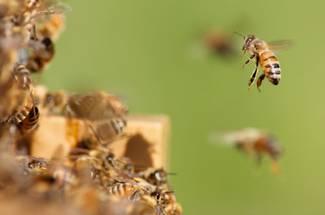 فصل B  در منحنی زنبور داری