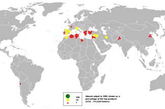 اهمیت و سطح زیر کشت بادام در ایران و جهان