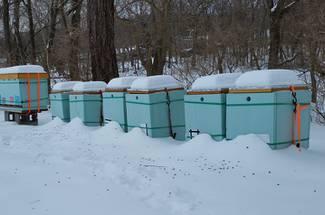 نکات مراقبتی زمستانه زنبور عسل