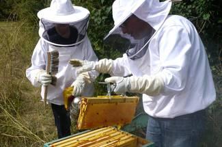 اقدامات لازم قبل از کوچ زنبور