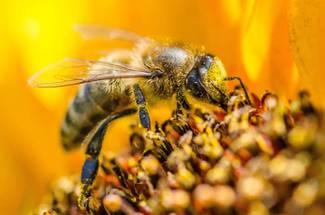 فصل C در منحنی زنبور داری