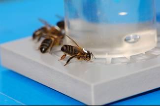 تغذيه مصنوعی زنبور عسل