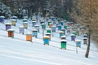 آماده کردن کندوها برای زمستان گذرانی و نگهداری آنها در زمستان
