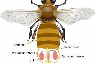 زهر، محصول جانبی زنبور عسل