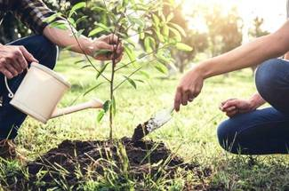 چگونگی کاشت درخت گیلاس